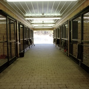 Custom Stable - Aisle view of cross-hatched stall fronts in a yearling barn