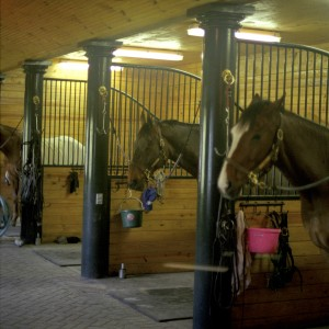 Horses in Custom Stable Stalls by Old Town Barns