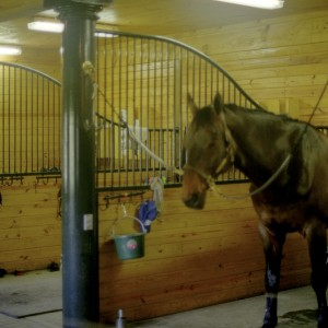A Horse in the Interior of a Custom Stable by Old Town Barns