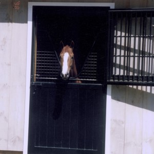 Interior of a Custom Stable with a Horse by Old Town Barns